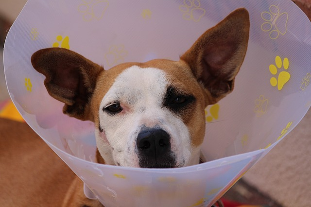 רשלנות רפואית בבעלי חיים