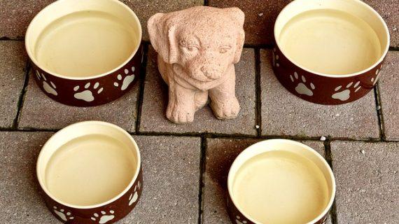 3 תוספי אוכל מומלצים לכלבים