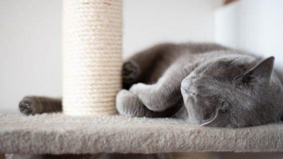 מתקני גירוד לחתולים איך בוחרים