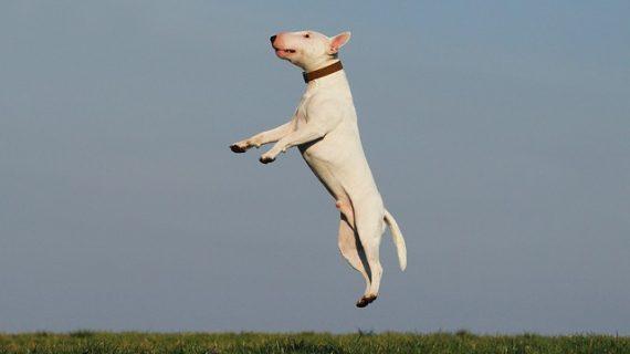ביטוח כלבים