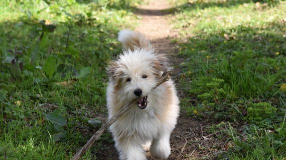 אוכל לכלבים הילס – מדוע משתלם לקנות מזון הילס לכלב שלכם
