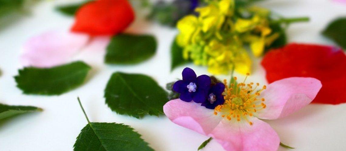 טיפול בפרחי באך