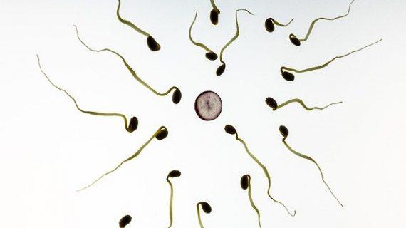 אילו טיפולים יעילים למצב של זרע חלש?