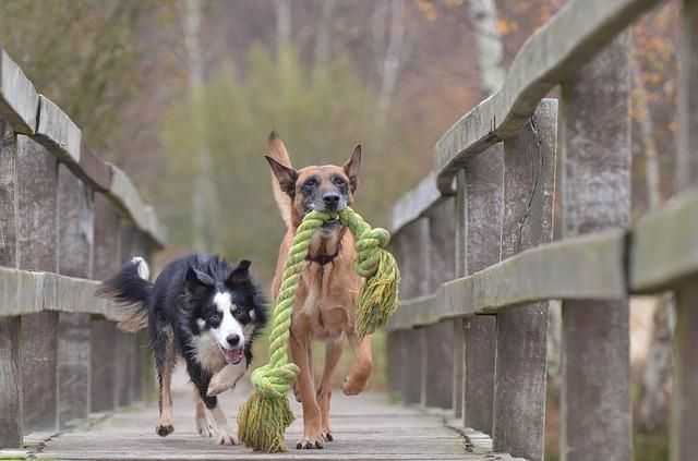 תוספי מזון לכלבים – גם טעים וגם בריא