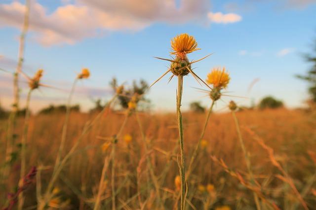 3 יתרונות בולטים להשקעה בקרקע חקלאית